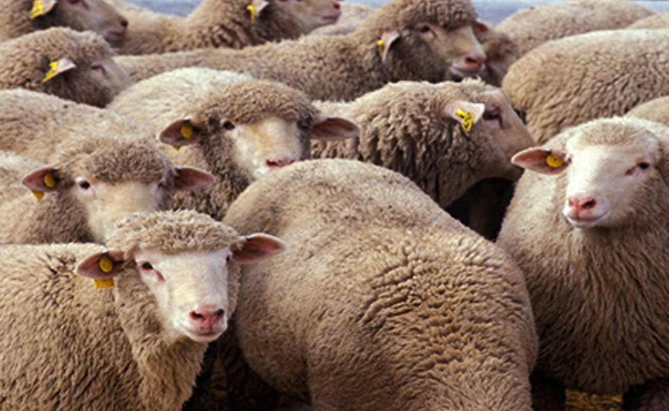 پیشگیری از اسهال گوسفند و دلایل بوجود آمدن آن