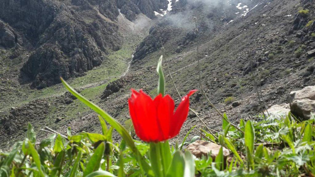 کوهستان شاهو/قله نور