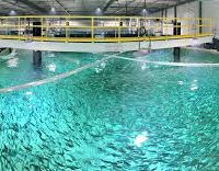 اکسیژن استخر ماهی