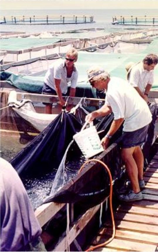 واکسیناسیون ماهی