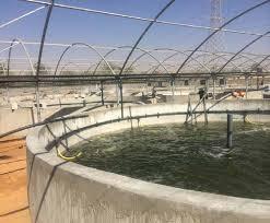 مدل حوضچه های پرورش ماهی دوار هرآنچه درباره پرورش قزلآلا باید دانست