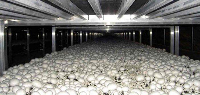 فروشگاه آژنو دام, طیور و آبزیان  Image of  قارچ فرمالین برای ضد عفونی