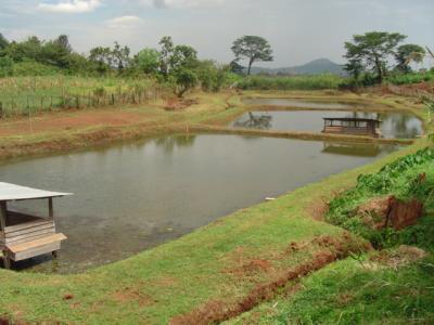 پرورش ماهی قزل آلا در استخر خاکی.اژنوهرآنچه درباره پرورش قزلآلا باید دانست