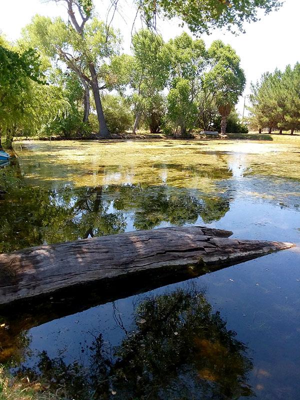 Chloramine T as a short-term bath fish in fish farming ponds