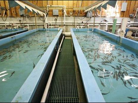 فضای مناسب استخر پرورش ماهی خاویار