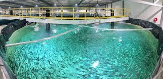 تمییز کردن استخربرای اکسیژن ماهی