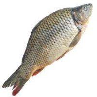 ماهی کپور