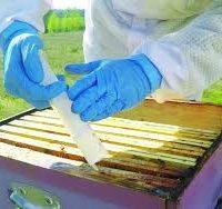 اسید اگزالیک در زنبورداری
