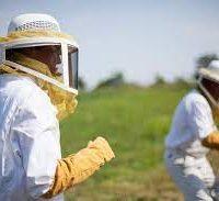 لباس زنبورداری