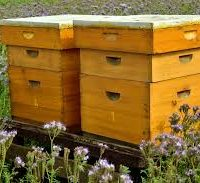 کندوی چوبی در زنبورداری