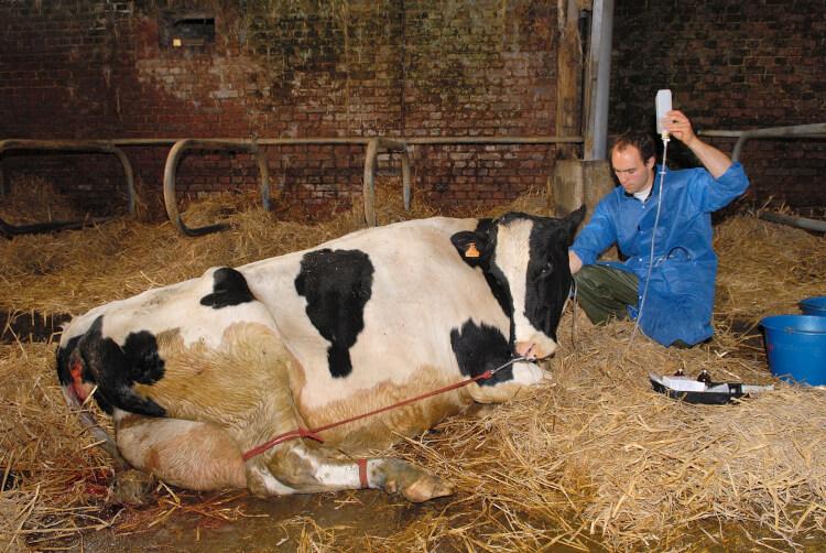درمان بیماری تب شیر