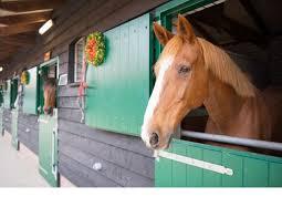 اصطبل مناسب پرورش اسب
