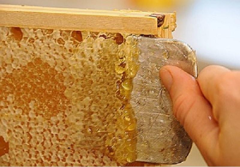 شهد و گرده زنبوران در تابستان