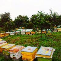 مکان مناسب استقرار زنبورستان