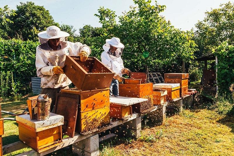 بهترین مکان برای استقرار زنبور