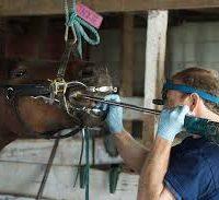 بهداشت و ضدعفونی اسب
