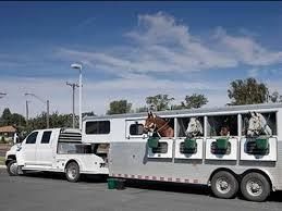 حمل و جابجایی اصولی اسب