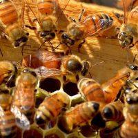 طرح زنبور داری