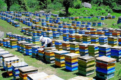 فضای مناسب شغل زنبورداری