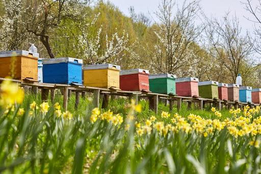 شهدوگرده زنبوردر تابستان