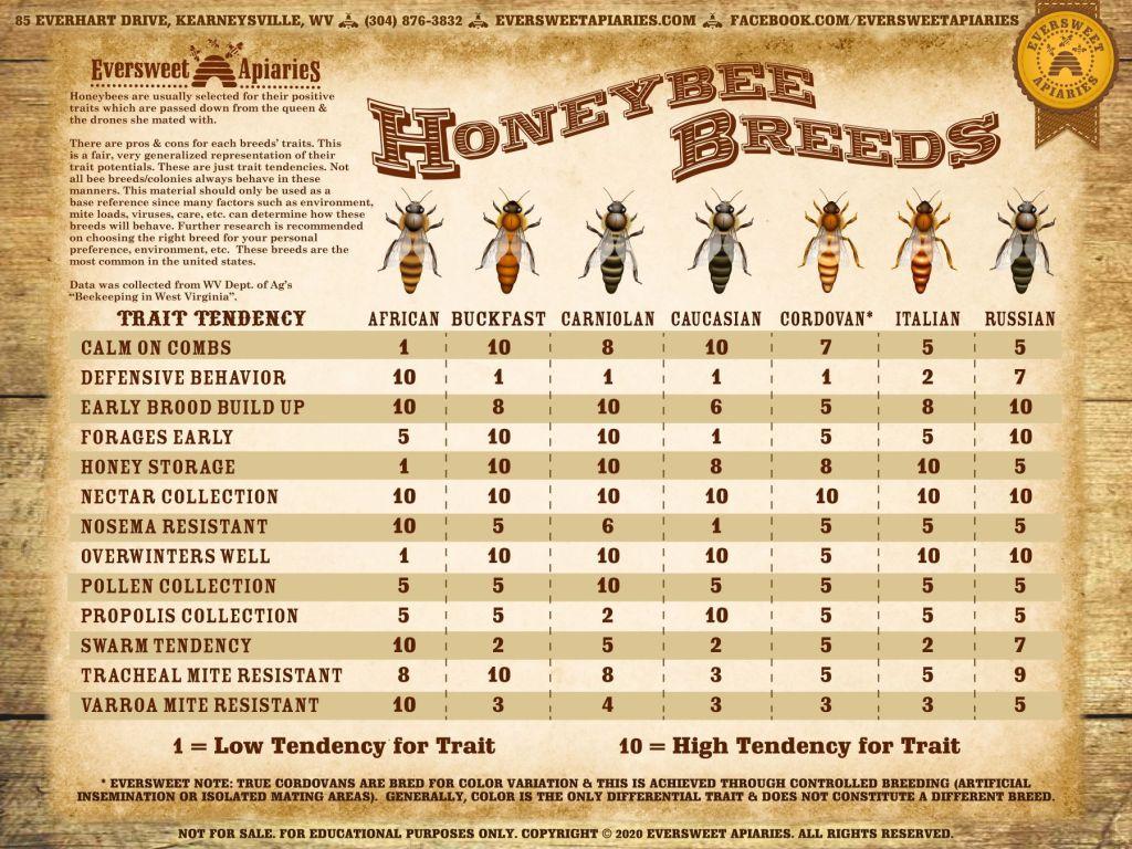 گونه های زنبور عسل