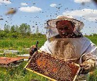 پرورش زنبور