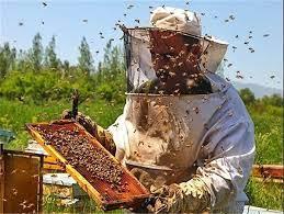 مدیریت زنبورداری