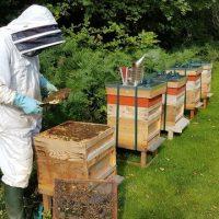 مکان مناسب زنبور داری
