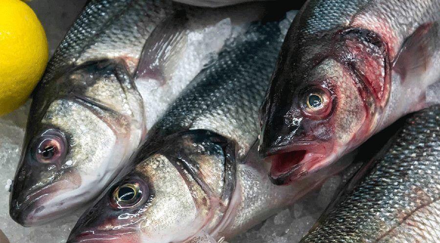 بیماری های ماهی قزل آلا